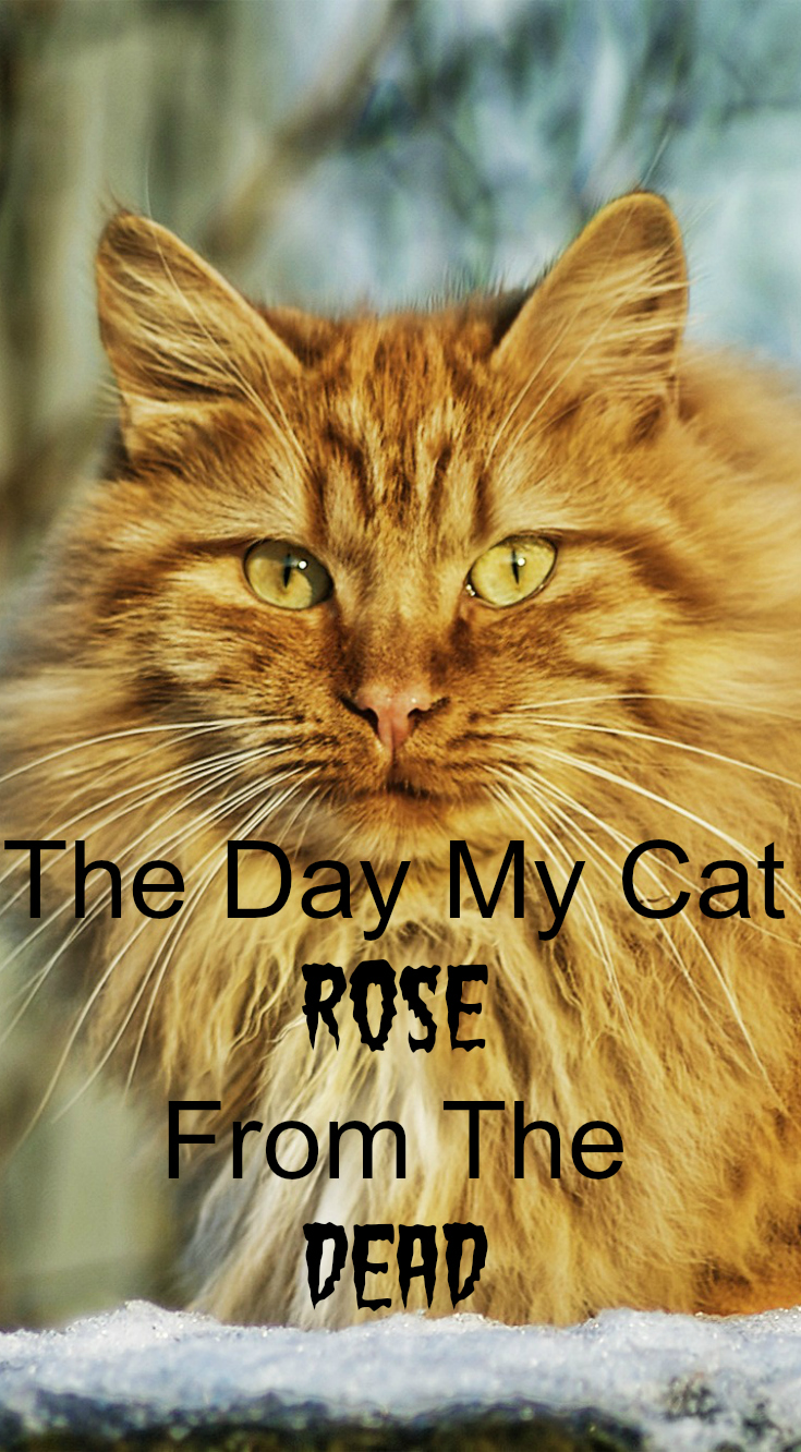 The Day My Cat Rose From The Dead