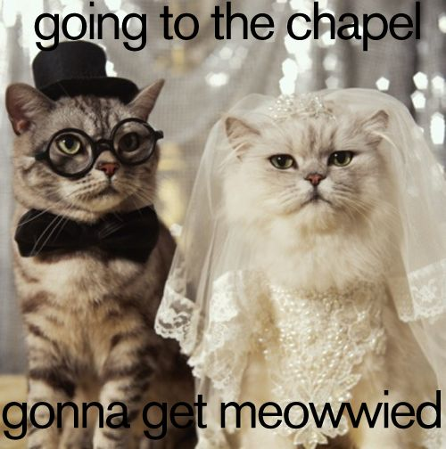 Wedding Wednesday | Planning | To Do List | Cats